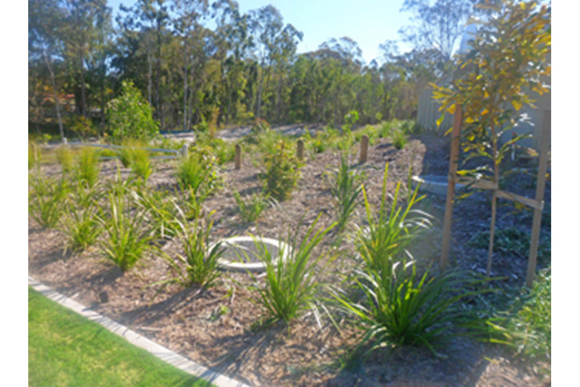 Queensland regeneration planting