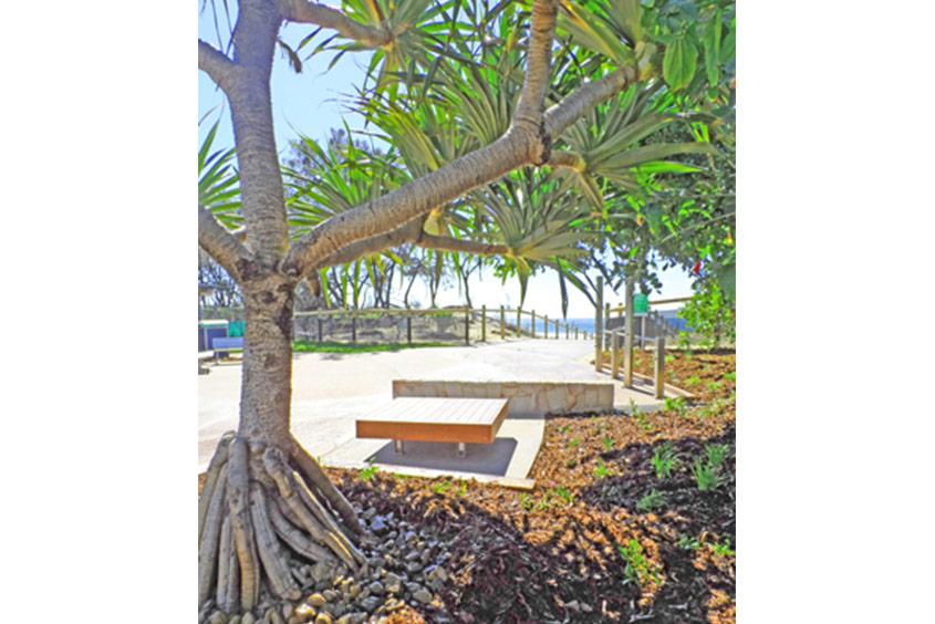 pandanus beach path sunshine coast