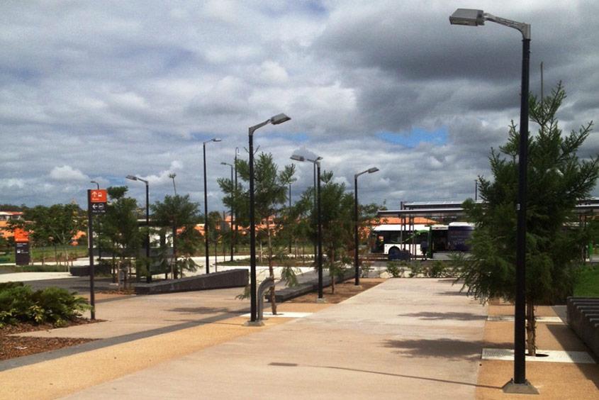 Brisbane street trees