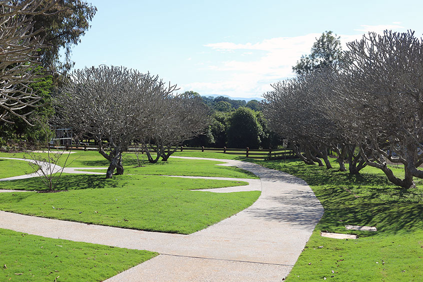North new south wales fangipani trees